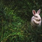 犬や猫は雷を怖がるけれど、ウサギは?怖がる理由と対処法は?